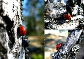 For the lovers of ladybugs by Upironetopyr