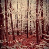 Couleurs d'automne V by Somebody--else