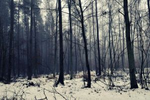 Winter forest by otulona