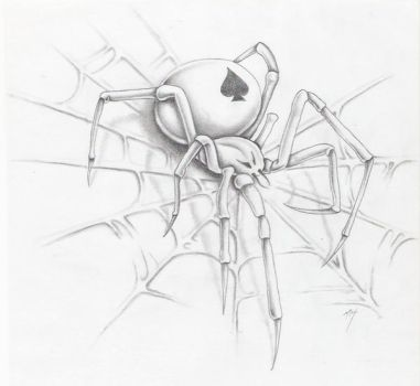 spider on a web by markfellows