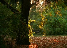 Beautiful indian summer by blessedchild