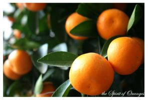 the mandarin oranges by nHieY