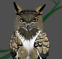 Cranky owl by Canfas