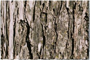 Bark Texture 3 by webgoddess