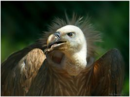 Vulture by Tripper67