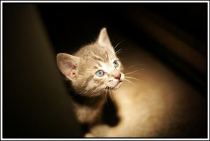 Curious Kitten by jbugbee