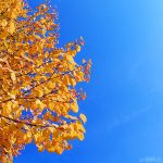 autumn square. by simoendli