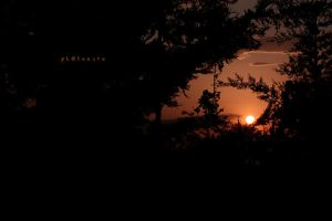 sunset behind trees by pLateauce