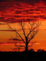 Tree at sunset by 77sandra