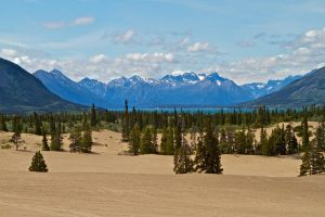Carcross Desert by juniberries