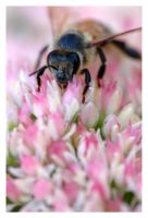 Bee Bee Bee by wiltz