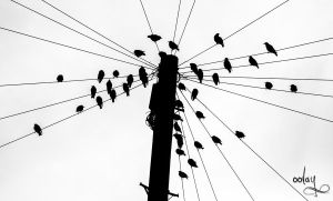 Birds on a Wire by oolay