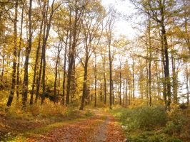 autumn forest 2 by sacral-stock