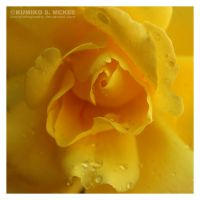 Yellow Rose 4 by KSMPhotography