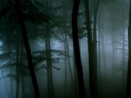 Spooky Forest by lichtdieb