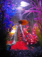 My Cat's Pet Fish pt4 by Asher-Bee