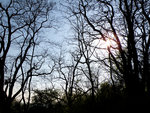 evening trees by Bhesi