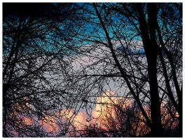 Through the Trees by krissybdesigns