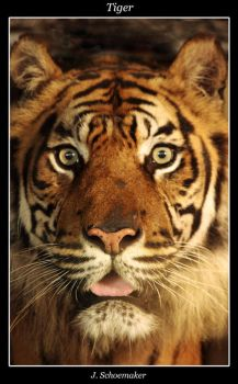 Tiger. by Jna1985