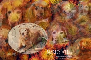 Marley by HrWPhotography