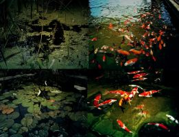 Fish,Water Backgrounds by letinhastock