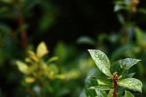 Some refreshing green by LPeregrinus