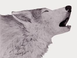 Howl by Vovix