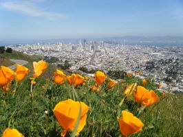 Flowerfront San Fransisco by phoenix-muse