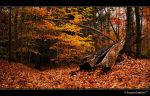 Autumn 4929 by Sooper-Deviant