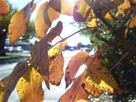 Leaves Outside School by BeckyHolly