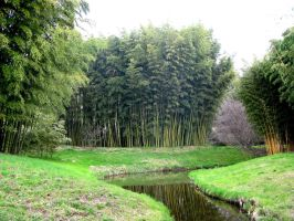 River through the Bamboo Forest by Syltorian