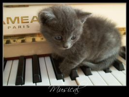 Piano Cat by LuAndTheFuzzyClouds
