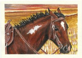 Ranch Pony ACEO by Fire-n-ash