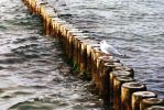 seagull by dorinaOo