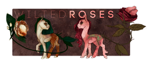 [[adopt auction]] | [CLOSED] | wilted roses by sevenspirals
