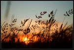 Through the Looking Grass by jaXno