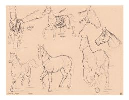 Horse 2 - Comparative Anatomy by CatCouch