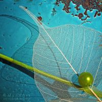 Leaf on Turquoise by MyonArt