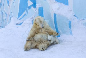 Polar bear with cub. Mother love by belovodchenko