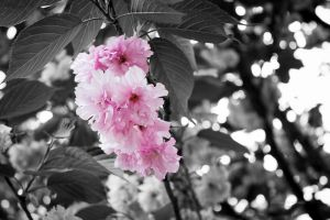 Rose-Colored Glasses by kuatto
