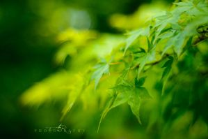 Green is the color by alerizzo