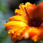 Flower 35 by EngrossingMoment