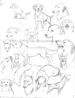 Dogs sketches by IPPO-Lita