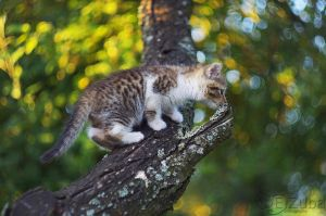 kitty on the tree. by efeline