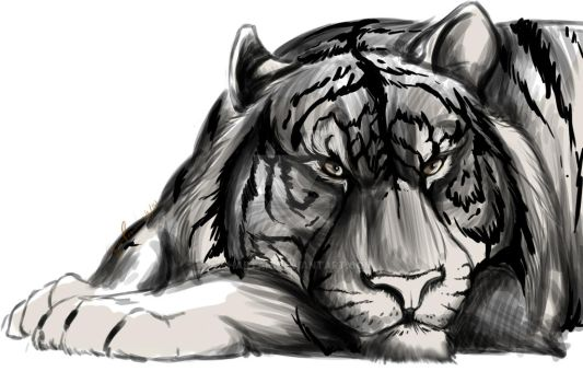 White Bengal Tiger by Shartan