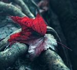 Fallen by BehindTheTrees