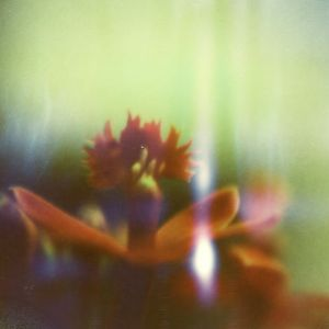 Epidendrum, Boiled by overdebated