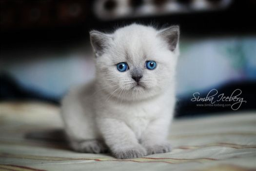 The saddest kitten in the world :) by Katrin-Elizabeth