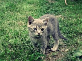 LiLy the small kitty by KissOnTheRain