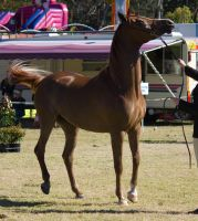 STOCK Canungra Show 2013-51 by fillyrox